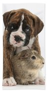 Boxer Puppy And Guinea Pig Beach Towel
