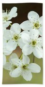 Bradford Pear Flower Beach Towel