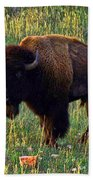 Buffalo Custer State Park Beach Sheet