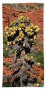 Cactus Outside The Chapel Of The Holy Cross Beach Towel