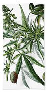 Cannabis Sativa Beach Towel