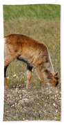 Caribou Fawn Beach Towel