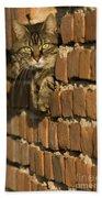 Cat On A Brick Wall Beach Towel