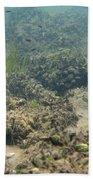 Catfish Fry Beach Towel