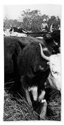 Cattle: Longhorns Beach Towel