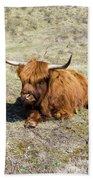 Cattle Scottish Highlanders, Zuid Kennemerland, Netherlands Beach Towel