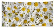 Chamomile Flowers Beach Sheet