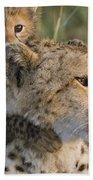 Cheetah Acinonyx Jubatus And Cub Beach Towel