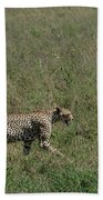 Cheetah On The Serengeti Beach Towel