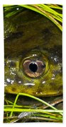 Chilean Widemouth Frog Beach Towel