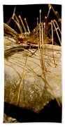 Chinese Cave House Centipede Beach Towel