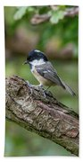 Coal Tit Beach Towel