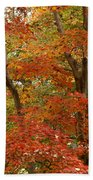 Colors Of Autumn Beach Towel