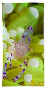 Commensal Shrimp On Green Anemone Beach Towel by Steve Jones