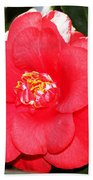 Coral Camellia At Pilgrim Place In Claremont-california  Beach Towel