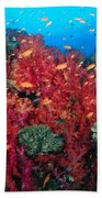 Coral Reef Scene Beach Towel