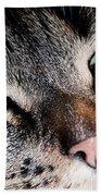 Cute Cat Close-up Portrait Beach Towel