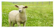 Cute Young Sheep Beach Towel