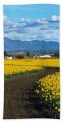 Daffodil Lane Beach Towel
