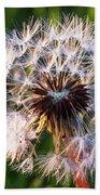 Dandelion In Nature Beach Towel