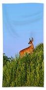 Deer Buck. Beach Sheet