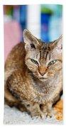 Devon Rex Purebred Domestic Cat Beach Towel