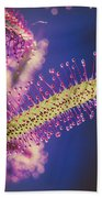 Dew Covered Tentacles Beach Towel