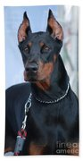 Doberman Pinscher  Beach Towel