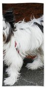 Dog At The Port Of Olympia Beach Towel
