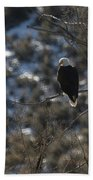 Eagle In Tree Beach Towel