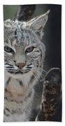 Face Of A Canadian Lynx Beach Towel