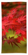 Fall Color Maple Leaves At The Forest In Aomori, Japan Beach Towel