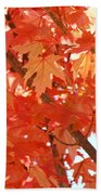 Fall Trees Colorful Autumn Leaves Art Baslee Troutman Beach Towel