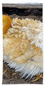 Feathered Finery Beach Towel
