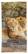 Female Lion And Cub Hdr Beach Towel