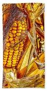 Field Corn Ready For Harvest Beach Towel