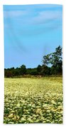 Field Of Queen Anne's Lace  Beach Towel