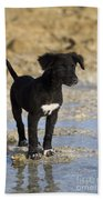 Fishing Puppy Of Polynesia Beach Towel