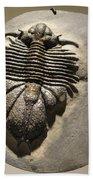 Fossil Beach Towel