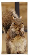 French Fry Eating Squirrel Beach Towel