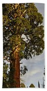 Giant Sequoia Beach Towel