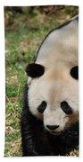 Gorgeous Black And White Giant Panda Bear Walking Beach Towel