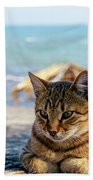 Gray Cat On The Background Of The Sea 1 Beach Towel