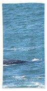 Gray Whale Beach Towel