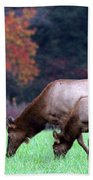 Grazing Together Beach Towel