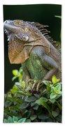 Green Iguana Iguana Iguana, Sarapiqui Beach Towel