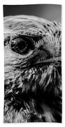 Harris Hawk   Beach Towel
