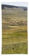 Hayden Valley Herd Beach Towel