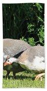 Helmeted Guineafowl Beach Towel