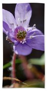 Hepatica 4 Beach Towel